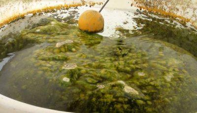 طريقة تنظيف خزانات المياه من الطحالب بالرياض مع نصائح هامة جدا