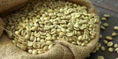 فوائد وأضرار القهوة الخضراء : كبسولات القهوة الخضراء للتنحيف